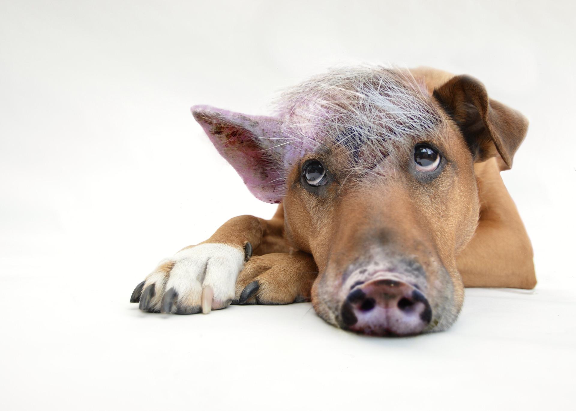 Wie schaffe ich es, meinen inneren Schweinehund loszuwerden?